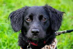 Het puppy luistert aan de eigenaar en oefent functies op het bevel uit Braaf en intelligente hond op een gang royalty-vrije stock foto
