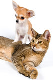 Het puppy met een kat Stock Afbeelding