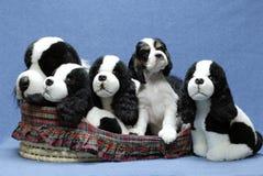 Het puppy met gevuld kijkt a houdt van Royalty-vrije Stock Fotografie