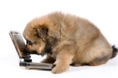 Het puppy met telefoon stock foto