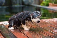 Het puppy neemt een bad royalty-vrije stock fotografie