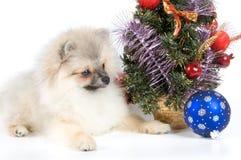 Het puppy ontmoet Nieuwjaar stock afbeelding