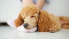 Het puppy slaapt op de vloer