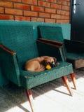 Het puppy slaapt op een stoel in de straat met een gele bloem in zijn tanden Paardebloem stock afbeelding