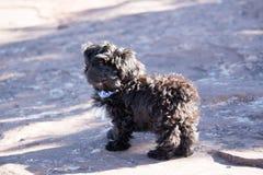 Het puppy staart Stock Foto's