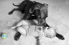 Het puppy staart neer Stock Foto's