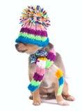 Het Puppy van Chihuahua met Hoed die over Ogen wordt getrokken royalty-vrije stock foto