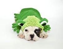 Het Puppy van de buldog in een Uitrusting van de Kikker. stock fotografie