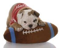 Het puppy van de buldog met gevulde voetbal Stock Fotografie