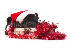 Het puppy van de chow-chow Stock Foto