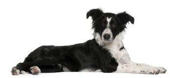Het puppy van de Collie van de grens, 5 maanden oud, het liggen Royalty-vrije Stock Fotografie