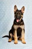 Het puppy van de Duitse herder op een blauwe spotty achtergrond Stock Foto's
