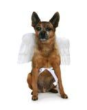 Het puppy van de engel royalty-vrije stock afbeeldingen