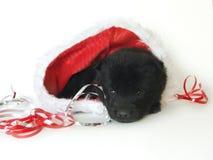 Het puppy van de kerstman Stock Fotografie