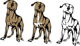 Het puppy van de kuilstier, beeld in opties royalty-vrije illustratie