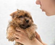 Het puppy van de meisjesholding Stock Afbeeldingen