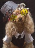 Het Puppy van de pook Royalty-vrije Stock Afbeeldingen