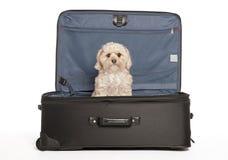 Het Puppy van de reis Stock Foto's