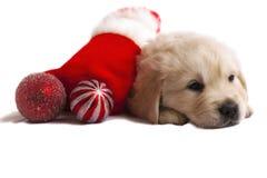 Het puppy van de retriever op wit met Kerstmisspeelgoed Stock Fotografie