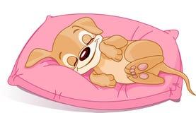 Het puppy van de slaap Royalty-vrije Stock Fotografie