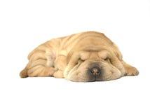 Het puppy van de slaap Stock Afbeelding