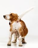 Het Puppy van de stilte Royalty-vrije Stock Foto