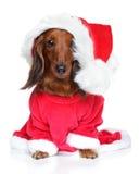 Het puppy van de tekkel in santahoed op een witte achtergrond stock afbeeldingen