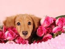 Het puppy van de valentijnskaart Stock Afbeeldingen