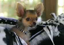 Het Puppy van de zak royalty-vrije stock fotografie