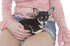 Het Puppy van de zak stock foto