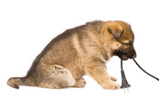 Het puppy van herdershonden dat over wit wordt geïsoleerdd royalty-vrije stock afbeeldingen