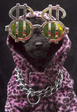 Het Puppy van het Teken van de dollar Stock Fotografie