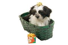 Het Puppy van Kerstmis in een Mand Stock Foto