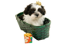 Het Puppy van Kerstmis in een Mand Royalty-vrije Stock Fotografie