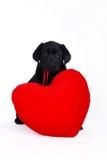 Het puppy van Labrador met rood hart stock afbeeldingen