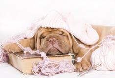 Het Puppy van Nice Stock Foto's
