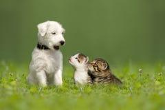 Het puppy van predikantjack russell terrier met twee kleine katjes Royalty-vrije Stock Afbeeldingen