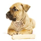 Het puppy van Rimpled stock fotografie