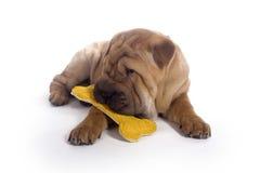 Het puppy van Sharpei Royalty-vrije Stock Foto