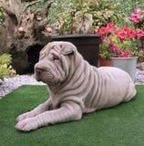 Het puppy van Sharpei Stock Foto