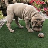 Het puppy van Sharpei Royalty-vrije Stock Fotografie