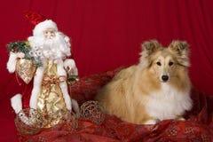Het puppy van Sheltie met het thema van Kerstmis stock afbeeldingen