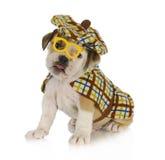Het puppy van Sherlock holmes Royalty-vrije Stock Afbeeldingen