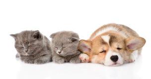 Het puppy van slaappembroke welsh corgi en twee katjes Geïsoleerde Royalty-vrije Stock Foto's