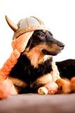 Het puppy van Viking Royalty-vrije Stock Foto
