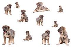 Het puppy van Yong 3 maanden leeftijds. stock afbeeldingen