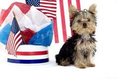 Het Puppy van Yorkie met Patriottisch Thema Royalty-vrije Stock Foto