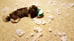 Het puppy vernietigt een stuk speelgoed royalty-vrije stock afbeeldingen