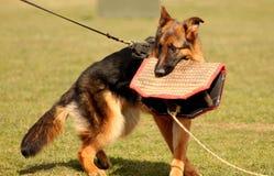 Het puppy ving de beloning Stock Foto's