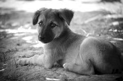 Het puppy wacht op zijn eigenaar op de snuitweg zwart-wit royalty-vrije stock fotografie